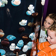 """The blubber jelly (scientific name: Catostylus mosaicus; Spanish: Medusa rolliza) comes in shades of blue, chalky white, or plum purple and ranges from Southeast Asia to Australia.  Exhibited at Monterey Bay Aquarium, California, USA. Although commonly named """"jellyfish,"""" jellies are plankton, not fish. Jellies (class Scyphozoa) lack the backbone (vertebral column) found in fish. Jellyfish have roamed the seas for at least 500 million years, making them the oldest multi-organ animal. The Monterey Bay Aquarium (MBA) was founded in 1984 on the site of a former sardine cannery on Cannery Row along the Pacific Ocean shoreline. Fresh ocean water is circulated continuously from Monterey Bay, filtered for visibility during the day and unfiltered at night to bring in food. Monterey was the capital of Alta California from 1777 to 1846 under both Spain and Mexico. In 1846 the US flag was raised over the Customs House, and California was claimed for the United States."""