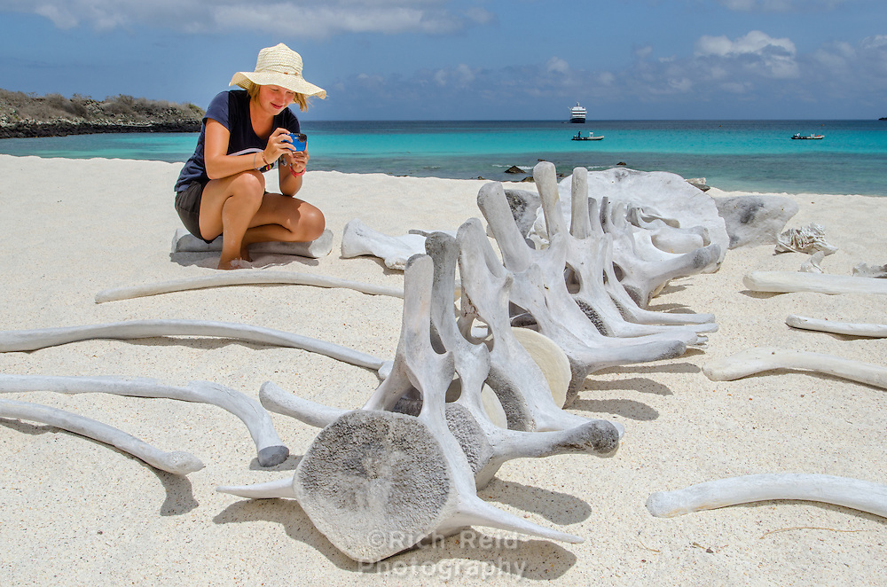 A women photographing a whale skeleton at Gardner Bay on Espanola Island, Galapagos.