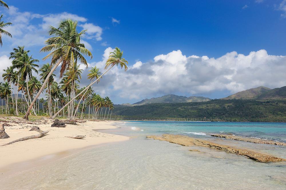 Palm trees,Playa Rincon,Las Galeras,Samana, Dominican Republic, Caribbean