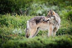 Denali National Park and Preserve - Alaska