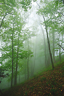A foggy forest view along the Blue RIdge Parkway, North Carolina