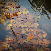 Autumn in Ireland, 2012: Fallen Autumn leaves in autumn colours of brown, yellow, orange and red, float on the surface of the canal water in Dublin, Ireland