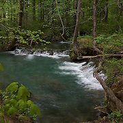 Scenic wooded Falling Spring  (spring fed mountain stream), just above the Falls, Bath County, Virginia.