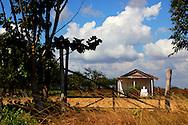 Rural San Juan y Martinez, Pinar del Rio, Cuba.
