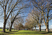 An avenue of trees in SW London's Wandsworth Park