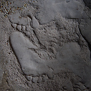 Footprints are seen in milled sorgum that has spilled onto the floor at a mill in the village of Kudo in Eastern Equatoria in South Sudan on 8 August 2014.