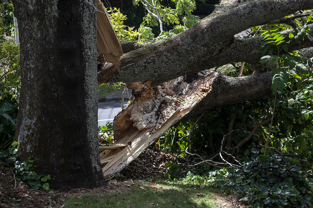 A number of cars were damaged on Bellevue Road in Mt Eden from power lines brought down by a large tree after strong wind gusts blew through Auckland , New Zealand, Saturday, November 30, 2013. Credit:SNPA / Bradley Ambrose
