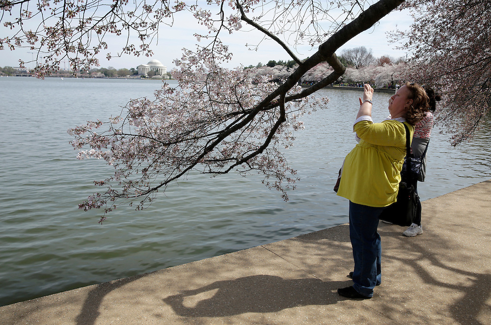 A woman photographs blooming cherry trees along the tidal bason in Washington March 23, 2016.      REUTERS/Joshua Roberts