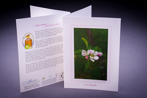 Learn about the special relationship between the apple blossom and the honey bee, and how an apple develops. <br />