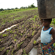 A girl walks through a muddy field as she carries a water bucket back home to the village of Ying, in the Savelugu-Nanton district, northern Ghana on Monday June 4, 2007.