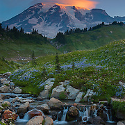 Mount Rainier, capped by a lenticular cloud, towers over a field of wildflowers and Edith Creek in the Paradise section of Mount Rainier National Park, Washington. The flowers on the hillside are predominently lupine, but also include some blooming Indian Paintbrush and Bear Grass. Mount Rainier, with an elevation of 14,411 feet (4,392 meters), is the tallest mountain in Washington and the highest mountain in the Cascade Range. The Paradise section of Mount Rainier National Park is known for dramatic displays of summer wildflowers.