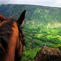 Waipi'o Valley, Big Island, Hawaii.<br /> Big Island Adventures, Horseback Riding.