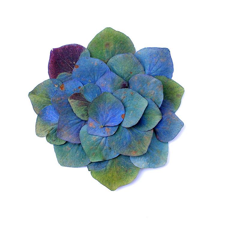 irish flowers / fa009