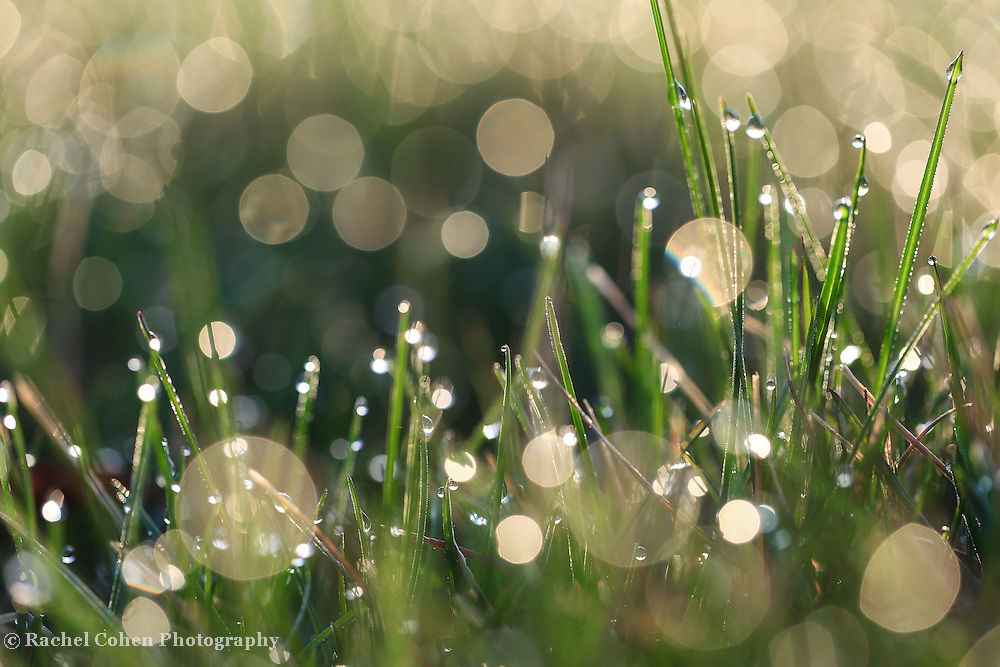 &quot;Morning Magic&quot; 2<br />