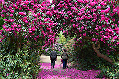 2017_05_16_LANGLEY_PARK_RHODODENDRONS_SCU