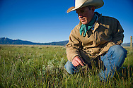 Bryan Ulring, general manager of the J Bar L Ranch, examines the plant diversity on ranch land on June 20, 2012 in the Centennial Valley, near Lakeview, Montana. The J Bar L, a member ranch of Yellowstone  Grassfed Beef, works towards economic and ecological sustainability using holistic management techniques. 'Proper grazing can really help battle desertification,' says Ulring. <br />