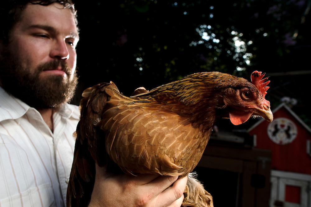 Photo by Matt Roth..Matt Fouse and his chickens in his Baltimore backyard  Monday, September 12, 2011.