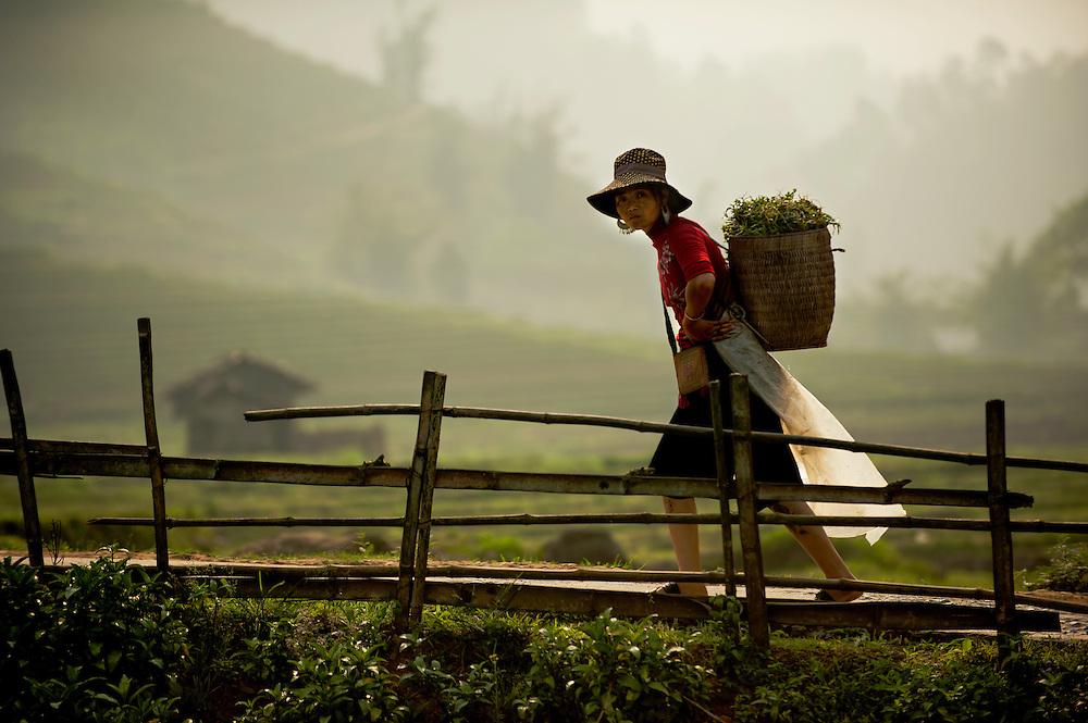 A woman walking through the rice fields of Sapa, Vietnam.