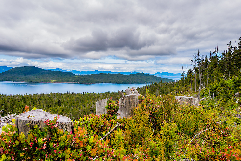 The first true day in Alaska was our first day in port at Ketchikan, and the first day that I learned that much of where we were visiting was a lush rainforest. <br /> <br /> Waking up early, as soon as the ship got to port my little brother and I hiked a short trail in the Tongass National Forrest (pictures to come later).  The main activity of the day was a Karting adventure with my family up an old logging trail.<br /> <br /> We reached a scenic (pre-determined by the excursion) vantage point, and I was actually surprised at how much time we had to wander or take pictures...I thought it would only be a few minutes, but we had at least 20. <br /> <br /> This was perfect for me to be able to shoot a panorama, family photos and some candids of the people we were with, while still being able to wander a bit to find an interesting photo.  Not far from where we parked I noticed these tree stumps surrounded by colorful bushes, so I climbed into them to capture this photo.