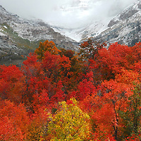 Beautiful Fall / Autumn colors up along the Battle Creek Trail, Uinta Mountains at the foot of the West side of Mount Timpanogos, above Pleasant Grove, Utah...Hermosos colores de Otoño.  Battle Creek Trail, al lado Oeste del Monte Timpanogos, sobre Pleasant Grove, Utah...Photo © 2009 by German Silva