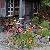 old bicycle turned into a garden feature and planter