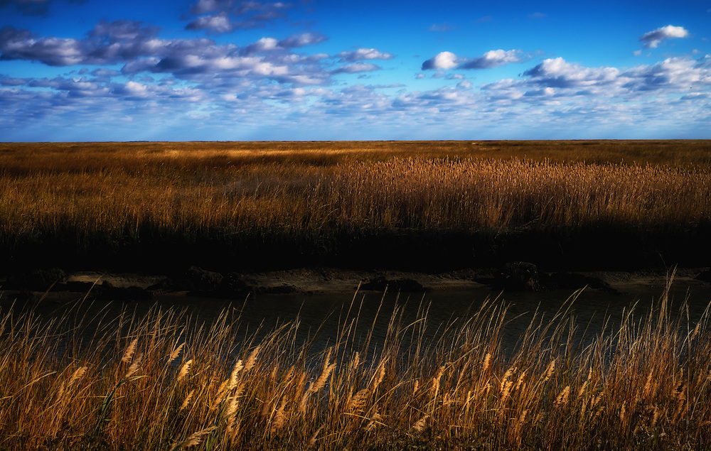 Marsh view, Bombay Hook National Wildlife Refuge, Delaware.