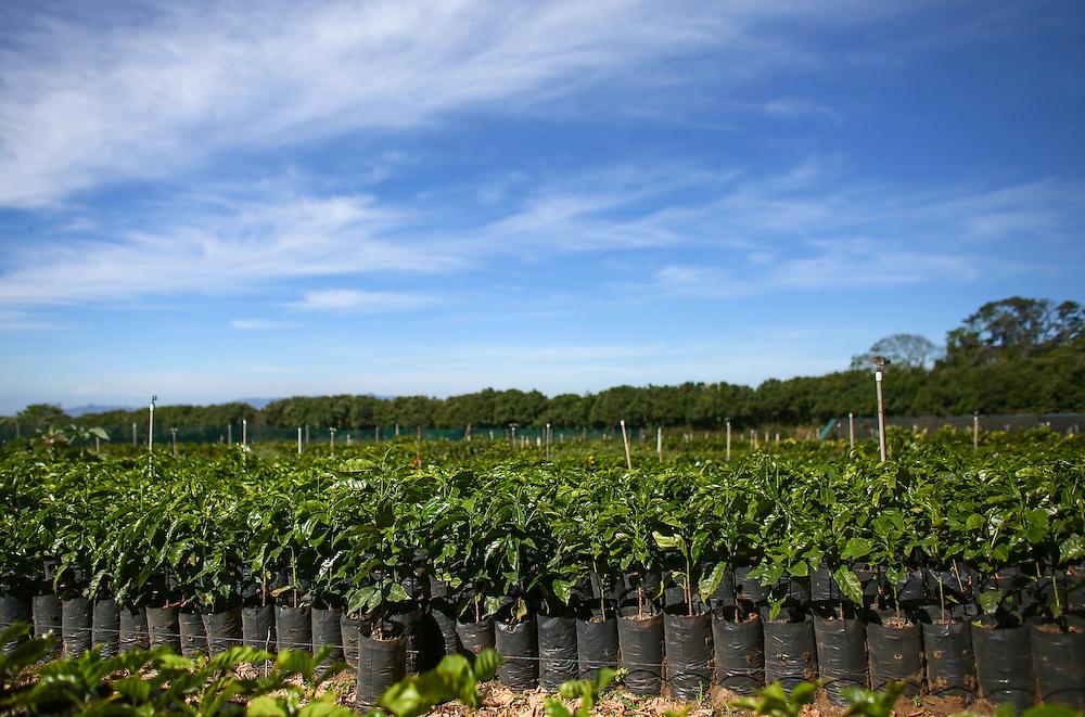 The Hacienda Alsacia coffee tree nursery is shown during the 2016 Starbucks Origin Experience for Partners. Photographed in January 2016. (Joshua Trujillo, Starbucks)