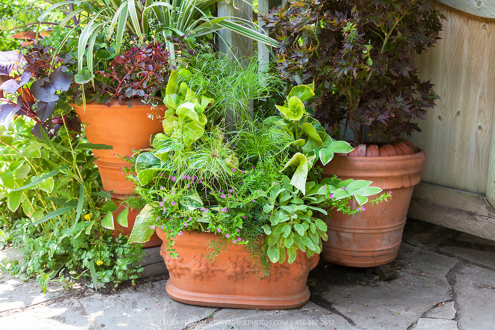 Plants in decorative terra cotta flower pots in a container garden.