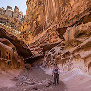 A hiker explores the beautiful slot of Crack Canyon, on federal BLM land in San Rafael Swell, near Goblin Valley State Park, Utah, USA. As part of the Colorado Plateau, the San Rafael Swell is a giant dome-shaped anticline of sandstone, shale, and limestone (160-175 million years old) that was pushed up during the Paleocene Laramide Orogeny 60-40 million years ago. Since then, infrequent but powerful flash floods have eroded the sedimentary rocks into valleys, canyons, gorges, mesas, and buttes. The Bureau of Land Management (BLM) is an agency within the United States Department of the Interior that administers American public lands.