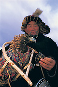Golden eagle in travel cradle<br /> (Aquila chrysaetos)<br /> at Annual eagle festival<br /> Western Mongolia
