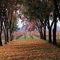 Inglenook Winery, Napa Valley, California