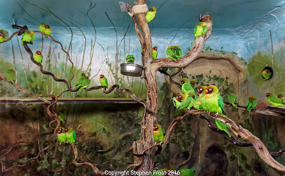 A flock of love birds.