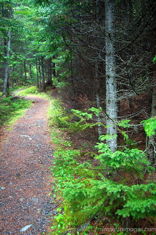 North America, Canada, Nova Scotia, Guysborough. Walking trail of Boylston Provinicial Park trail.