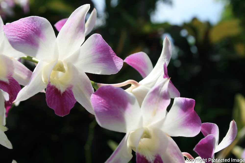 Bali Orchid Garden. Indonesia. Foto: Bente Haarstad