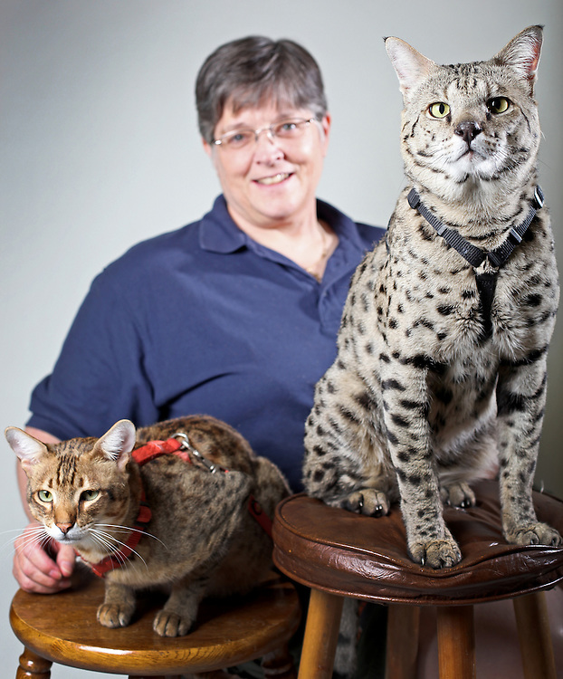 mp050713h/A1/Morgan Petroski/050713 -- Deborah-Ann Milette (cq), from Oklahoma, with her Savannah cats, 4 year-old Peanut, at left, and 7-year-old Motzie, at right, Tuesday, May 7, 2013. (Morgan Petroski/Journal)