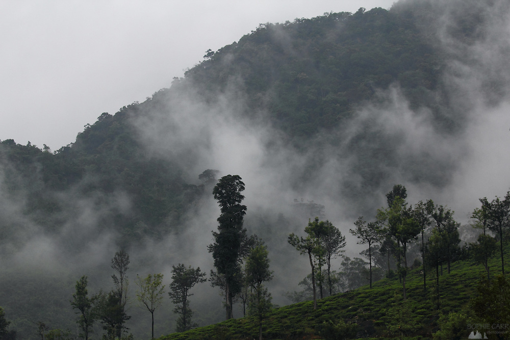 Mist clings to the hills between Nuwara Eliya and Haputale, seen from the railway that twists its way through Sri Lanka's spectacular hill country