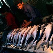 Fishmonger, Kathmandu, Nepal. 8/2/05.