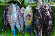 Fish Market<br /> Biak Island<br /> West Papua<br /> Indonesia