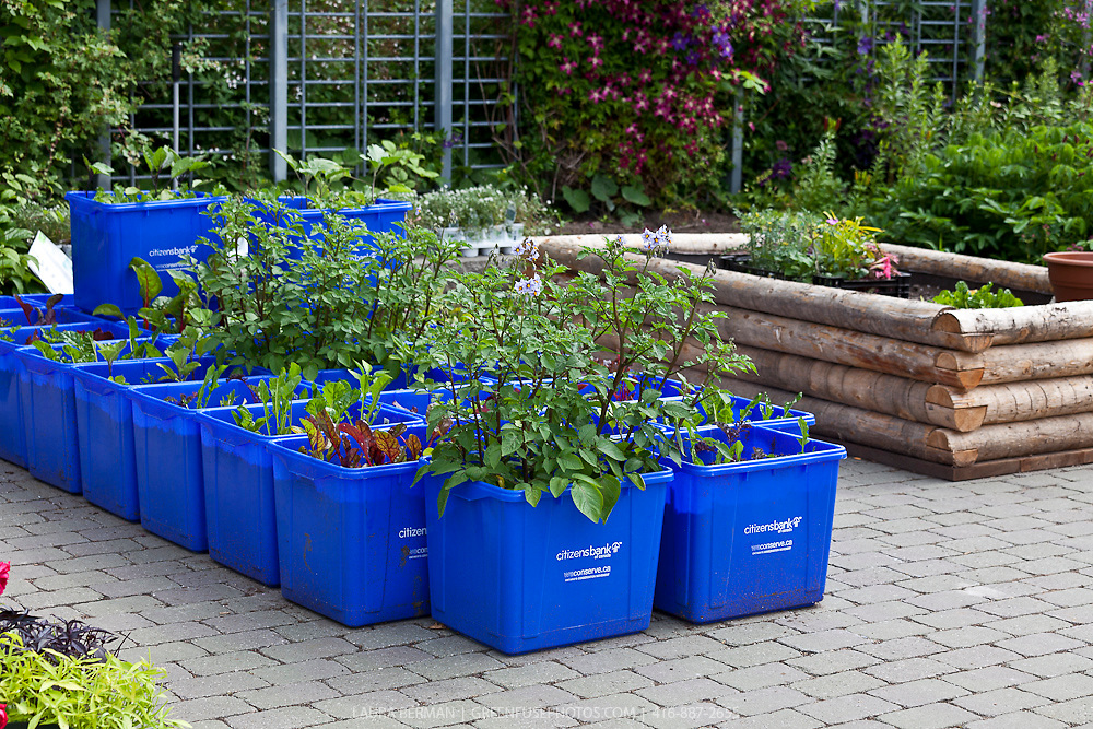 Edible container garden greenfuse photos garden farm food photography - Vegetable gardening in containers ...