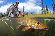 Northern Pike<br /> <br /> Patrick Clayton/Engbretson Underwater Photography