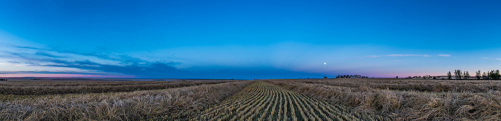 The waxing gibbous Moon, two days before full and the true Harvest Moon, rising over a just-swathed (that afternoon!) wheatfield near home in southern Alberta. The blue arc of the Earth&rsquo;s shadow is rising almost due east at the end of the windrows which are oriented east-west. The pink Belt of Venus above the shadow arc was not obvious tonight. Some very subtle anti-crepuscular rays converge toward the anti-solar point where the Moon will be on Full Moon night. <br /> <br /> This is a 6-segment panorama with the 24mm lens and Nikon D750, stitched with Adobe Camera Raw.
