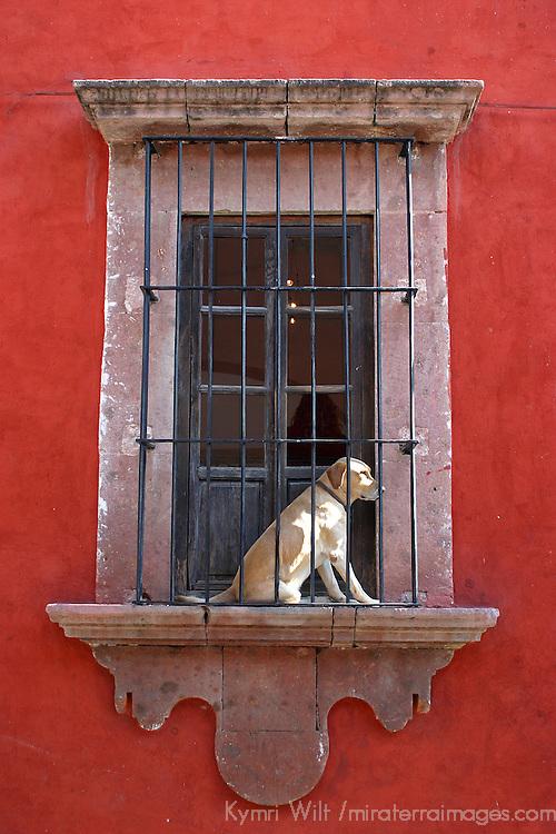 Mexico, Guanajuato, San Miguel de Allende. Dog in window, San Miguel de Allende.