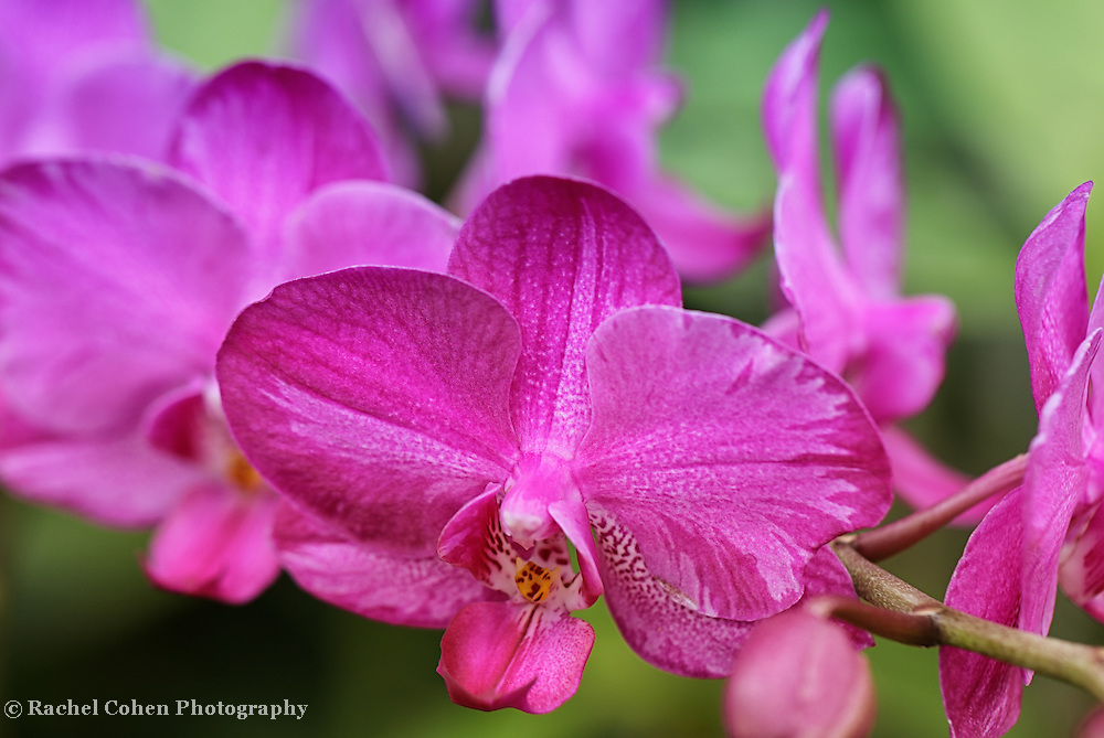 &quot;Purple Orchid Special&quot;<br />