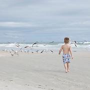 A young boy runs toward a flock of gulls at the beach.