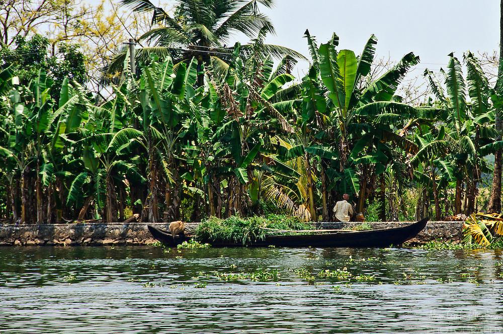 A banana plantation worker in the Kerala backwaters.