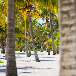 Palm trees dot the tropical beaches of the Mexican Riviera Maya.