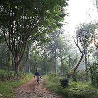 A coffee plantation in Tamil Nadu. Despite India's reputation for tea drinking it is the world's sixth largest coffee exporter.