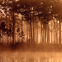 Morning sun filters through fog and pine trees at Long Pine Key pond in Everglades National Park, Florida. WATERMARKS WILL NOT APPEAR ON PRINTS OR LICENSED IMAGES.