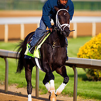 Kentucky Derby contender Revolutionary gallops at Churchill Downs in Louisville, KY on May 02, 2013. (Alex Evers/ Eclipse Sportswire)