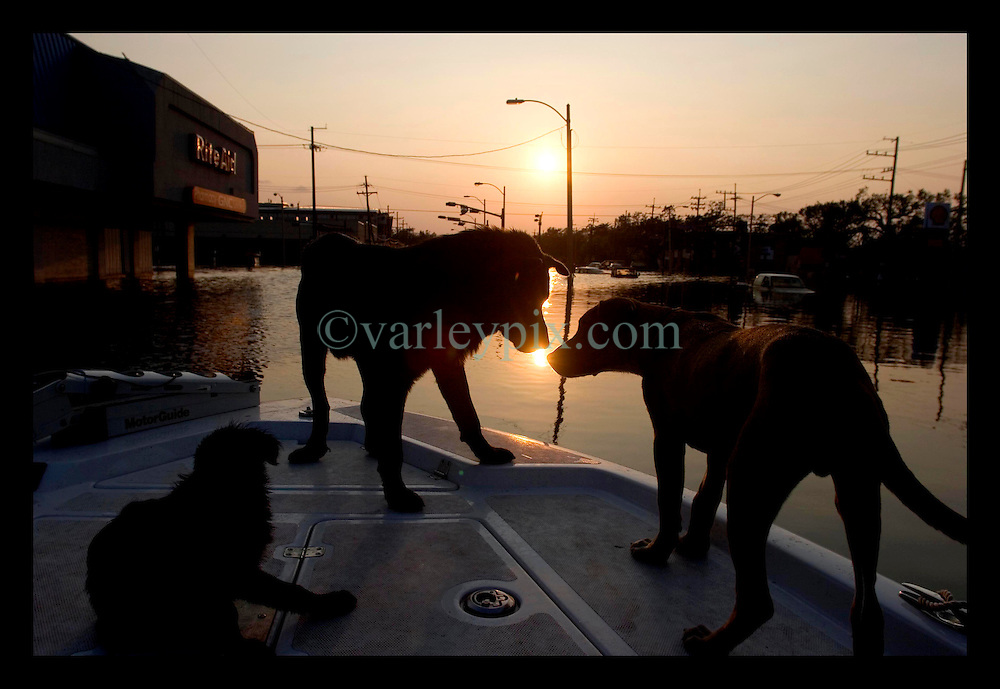 5th Sept, 2005. Hurricane Katrina aftermath. New Orleans. Animal rescue boat. Dogs greet each other as the sun drops in the horizon over a devastetd New Orleans.